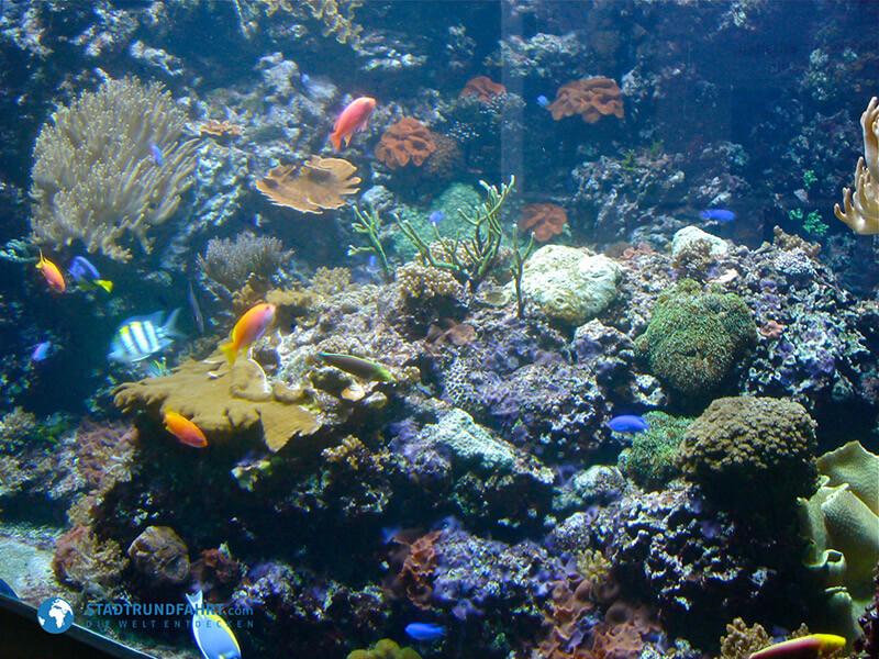 Aquarium Berlin - Ein Nachmittag im Rausch der Farben und Formen