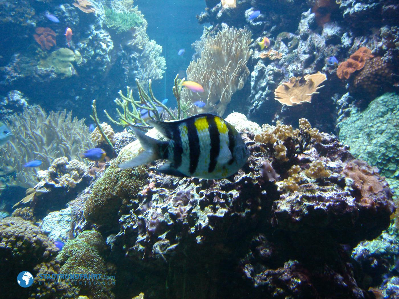 marine aquarium berlin