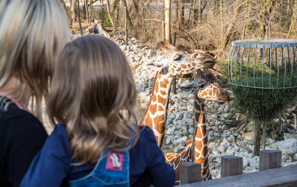 Tierpark Hellabrunn - Marc Müller