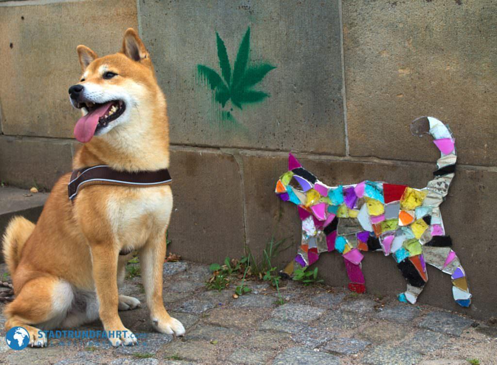 Sightseeing mit Hund in Dresden