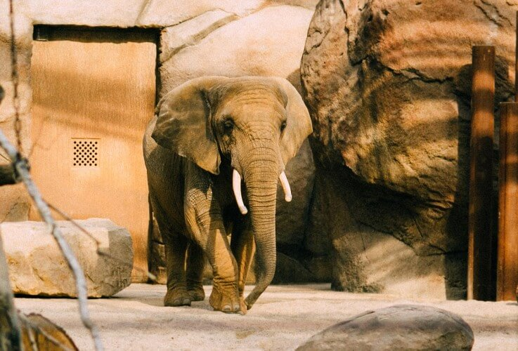 Zoo - Bild 2