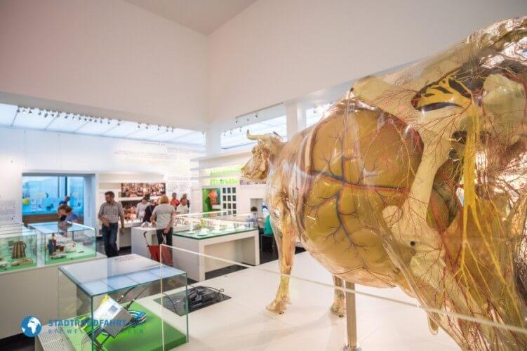 Deutsches Hygiene-Museum - Bild 3