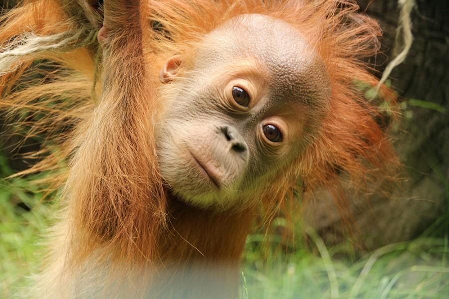 Zoo - Tagesticket - Bild 1