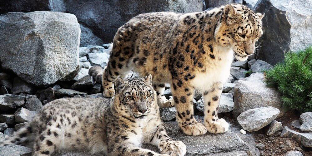 Eintritt Zoo Leipzig - Bild 2