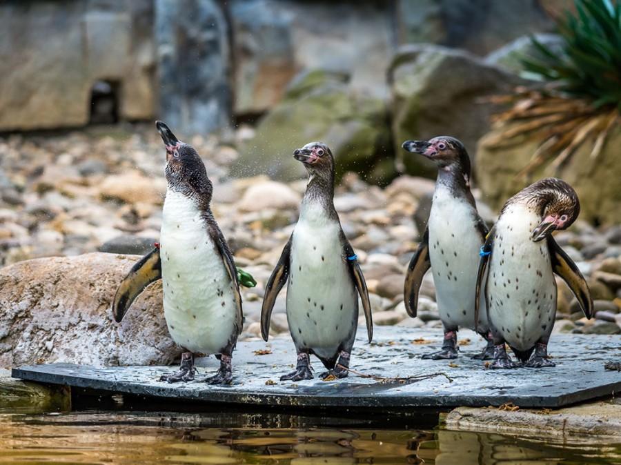 Zoo - Tagesticket - Bild 5