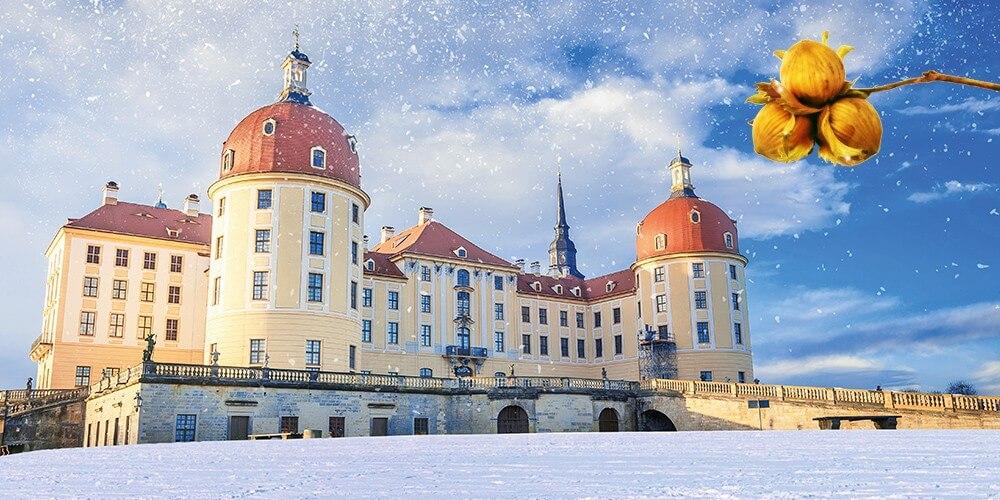 Romantischer Ausflug nach Moritzburg mit Eintritt ins Aschenbrödel-Schloss - Bild 1
