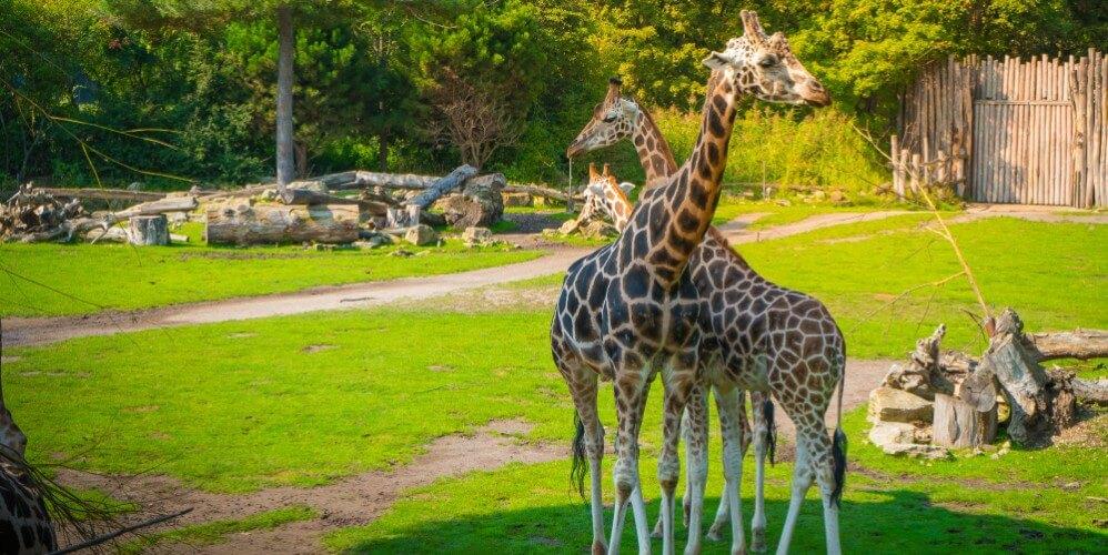 Eintritt Zoo Leipzig - Bild 5