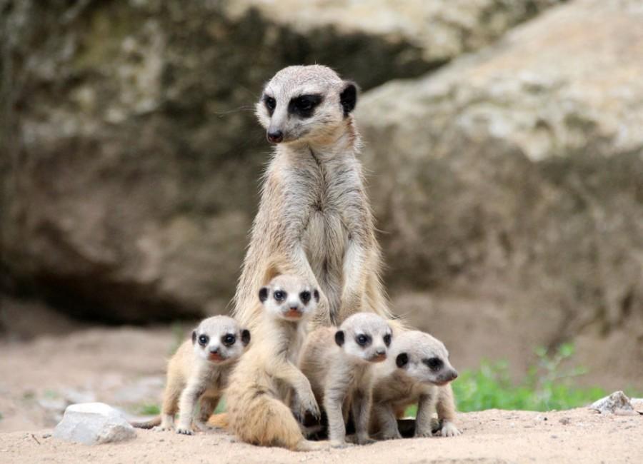 Zoo - Tagesticket - Bild 3