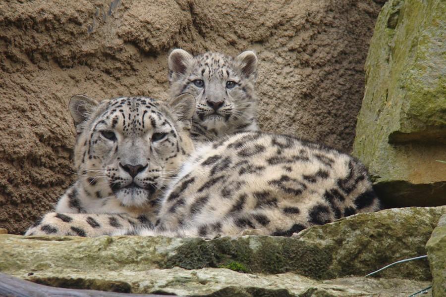 Zoo - Tagesticket - Bild 6