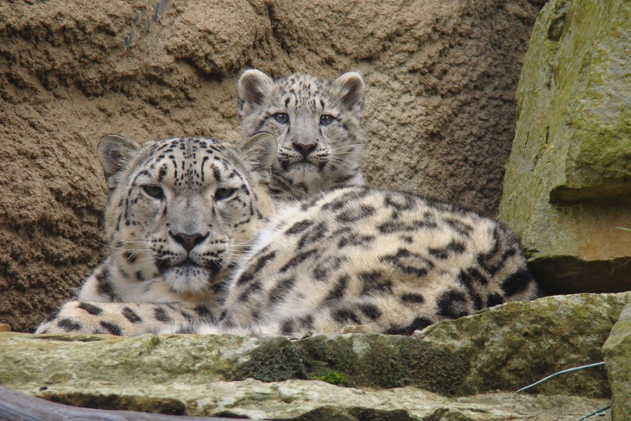 Zoo - Bild 6