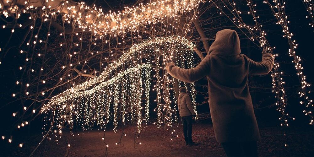Eintritt Christmas Garden Pillnitz + Rundfahrt im Weihnachtsbus - Bild 5
