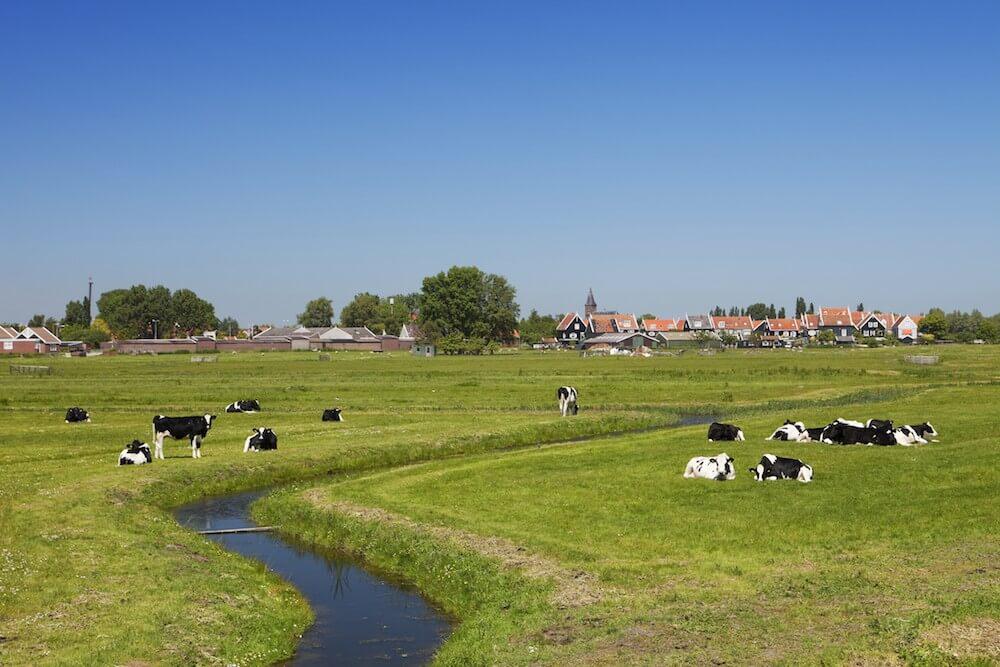 Holland-Tour: Windmühlen, Käsemanufaktur & Holzschuhmacher - Bild 2